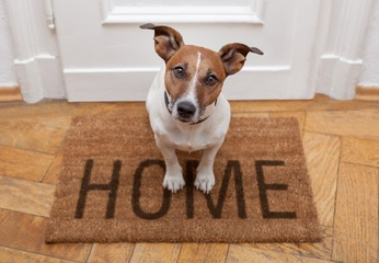 Invite Your Furry Friend into Your Palm Coast New Homes