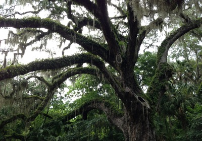 Explore an Ancient Spot in Ormond Beach